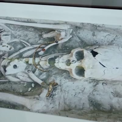 video-bijuterii-gasite-intr-un-mormant-vechi-de-peste-1.600-de-ani,-expuse-la-muzeul-judetean-buzau